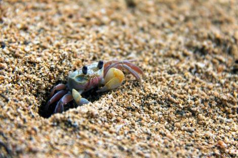 This little guy has feelings, too. Photo: jan van schijndel/Flickr