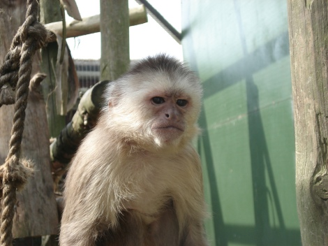 This monkey is totally judging you. Photo: Marion O'Sullivan